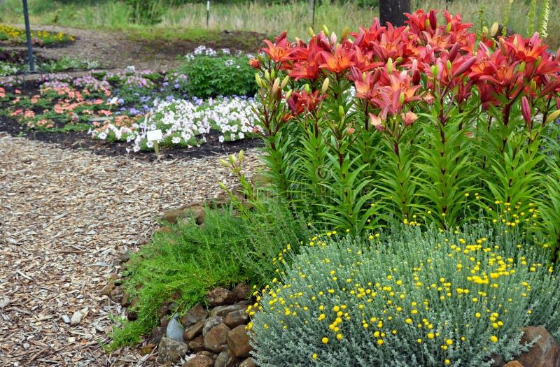 De kleurrijke tuin van de de zomerbloem stock foto