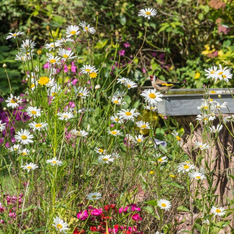 De kleurrijke Tuin van het Land royalty-vrije stock afbeeldingen