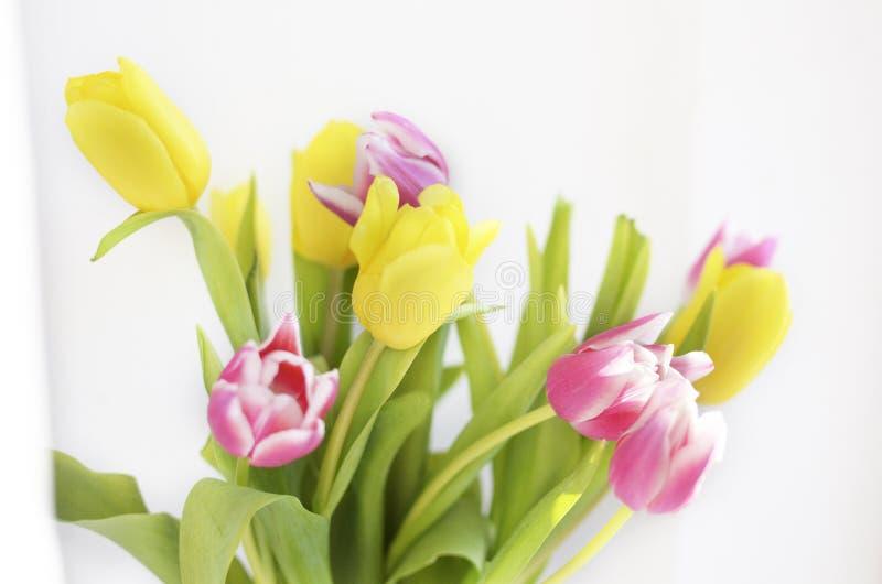 De kleurrijke tulp bloeit achtergrond, vage bloemen stock foto
