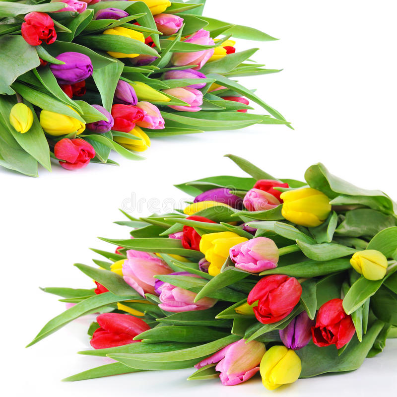 De tulpenbloemen van de lente royalty-vrije stock afbeelding