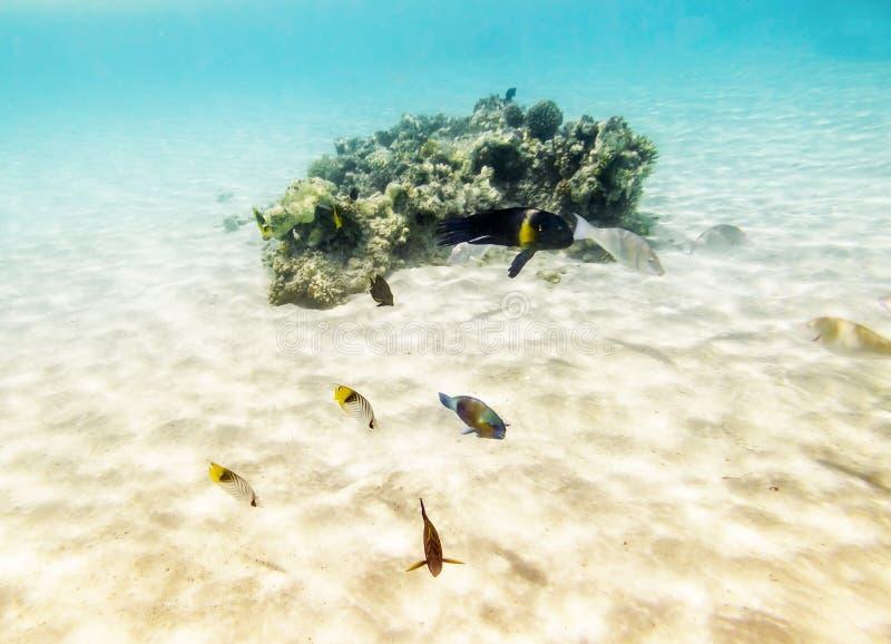 De kleurrijke vissen zwemmen op een koraalrif in het Rode Overzees royalty-vrije stock afbeelding