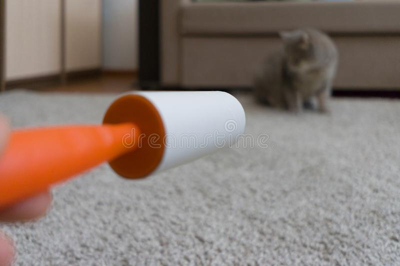 De kleverige rol maakt het tapijt van kattenhaar schoon stock foto