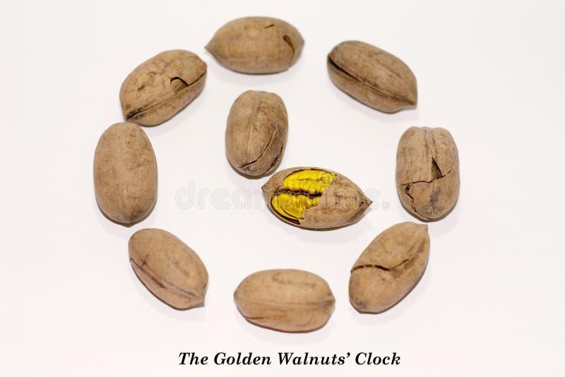 De klok van de Gouden Okkernoten royalty-vrije stock afbeeldingen