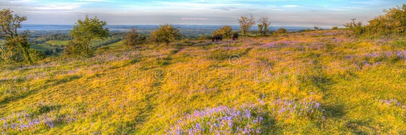 De klokjes van Somerset van Quantockheuvels en wilde poneys op een de zomeravond in kleurrijk HDR royalty-vrije stock fotografie