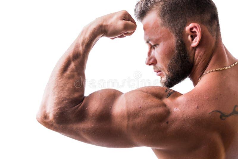 De knappe topless spiermens ` s bicep stelt stock afbeeldingen