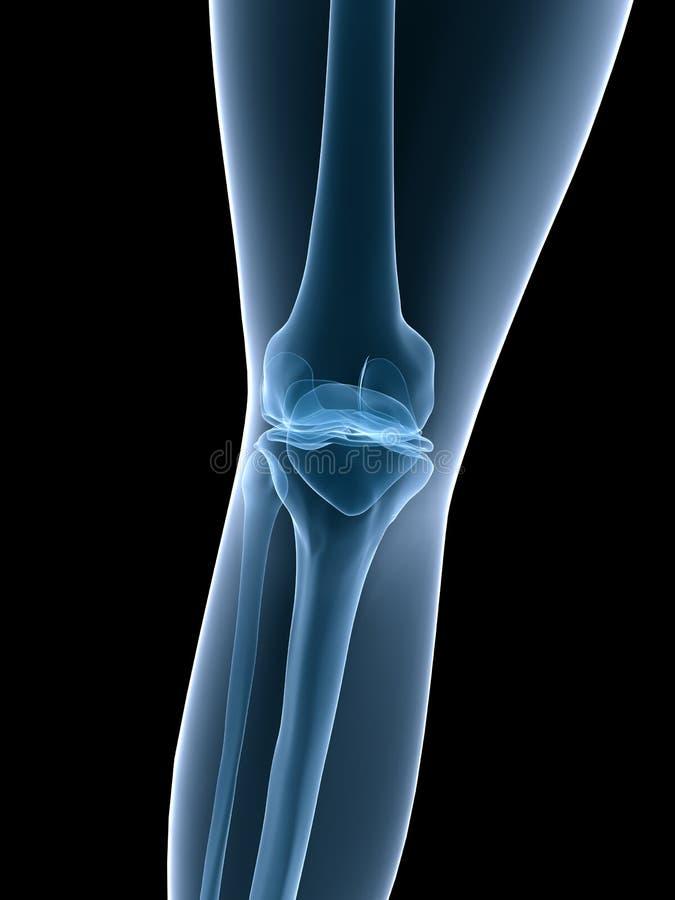 De knie van de röntgenstraal royalty-vrije illustratie