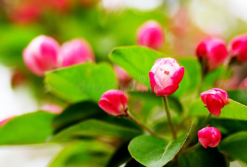 De knoppen van bloemen royalty-vrije stock foto's