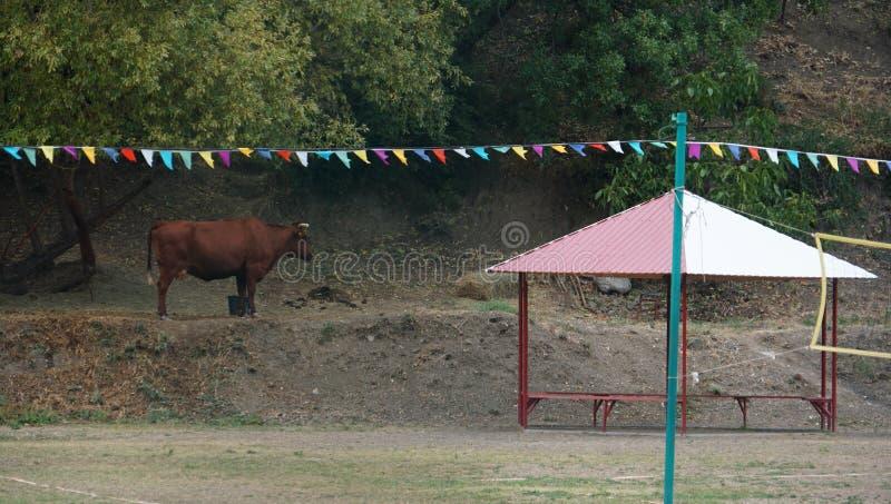De koe onder een slinger van feestelijke vlaggen in een stadspark dichtbij overzees royalty-vrije stock foto
