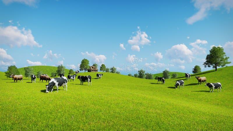 De koeien weiden op de open groene weiden stock illustratie