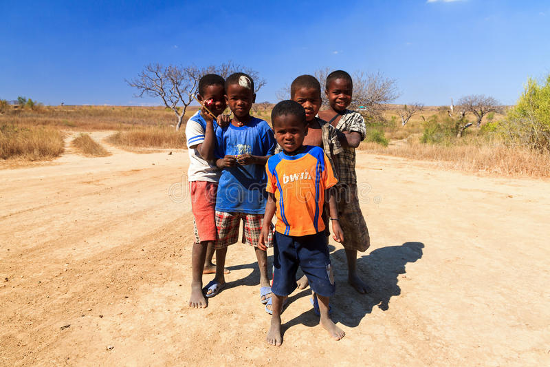 De koele kerels van Madagascar royalty-vrije stock foto