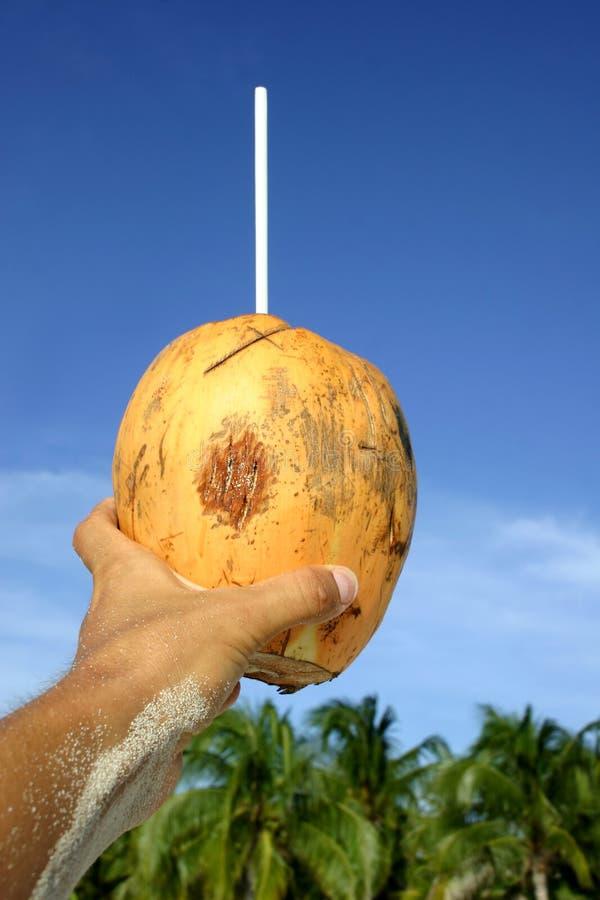 De kokosnoot juicht toe stock afbeeldingen