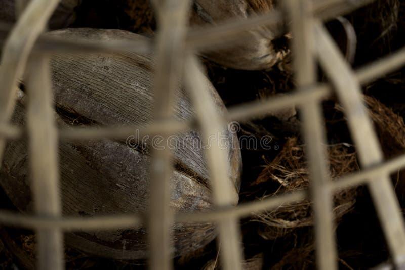 De kokosnoot is in de kooi It' s massa royalty-vrije stock foto's