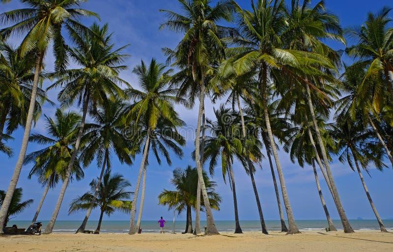 De kokosnoot treen dichtbij strand en de blauwe hemel stock afbeeldingen