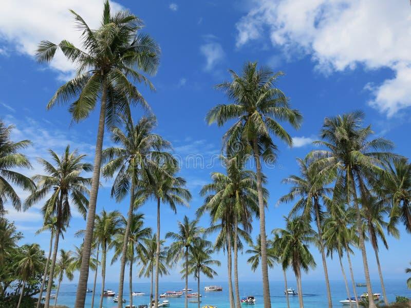 De Kokospalm stock foto's