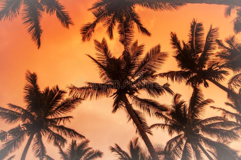 De kokospalmen is in keerkring op zonsondergang royalty-vrije stock foto's