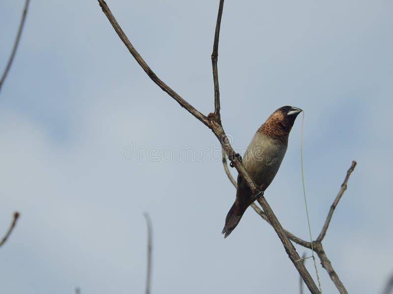 De Kolibrie op de Tak stock afbeelding