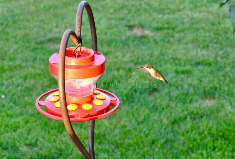 De kolibrie slaat stock afbeeldingen