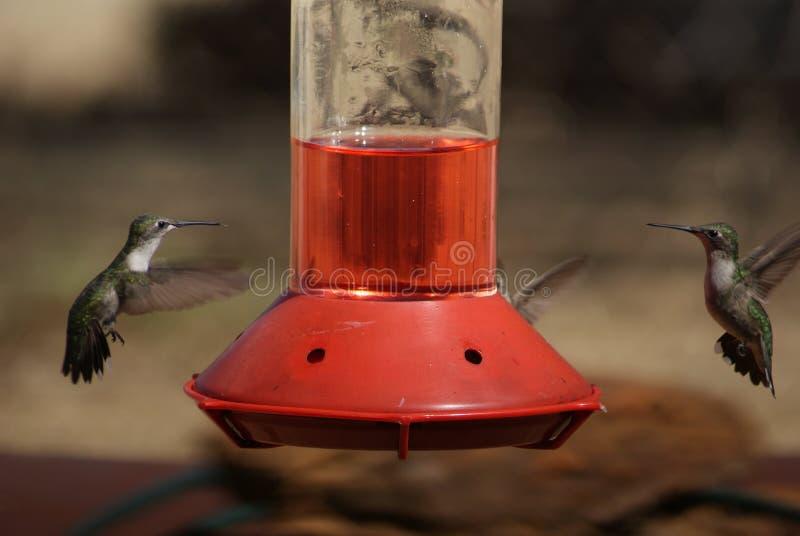 De kolibries in staren onderaan over een Voeder royalty-vrije stock afbeeldingen