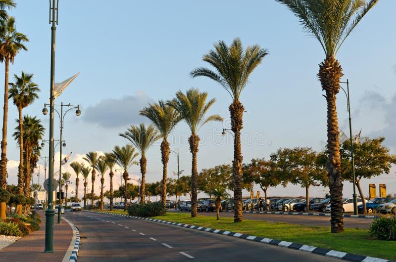 De Kolom van palmen stock fotografie