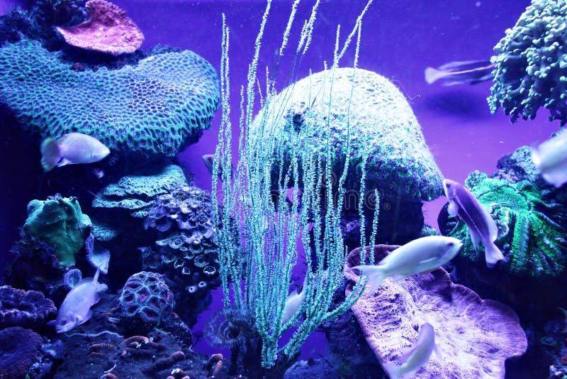 De kolonie van het koraal royalty-vrije stock afbeelding