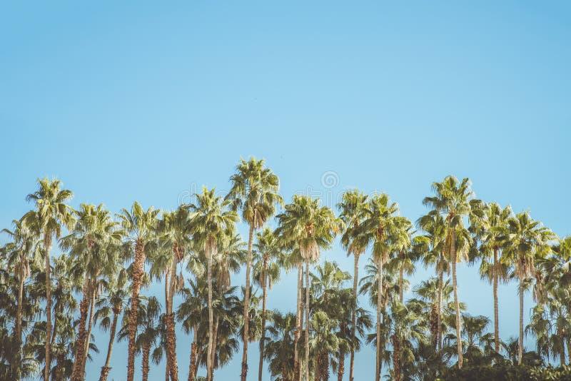 De Koloniepalmen en Bergen van de Palm Springs Uitstekende Film stock fotografie
