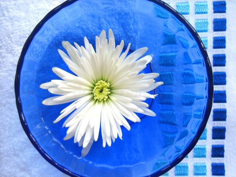 De kom van de bloem stock foto's