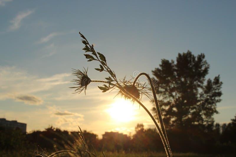 De komende zonne kleine lamp stock afbeelding