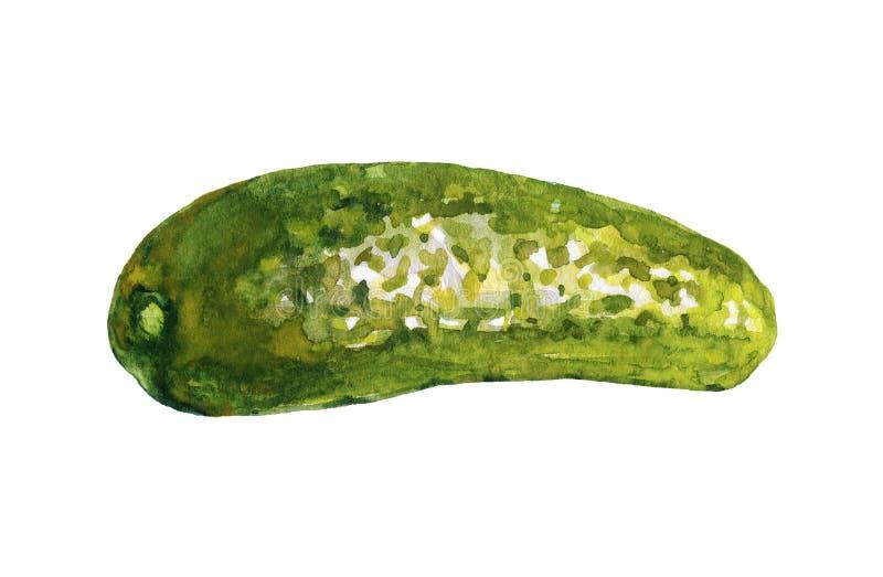 De komkommer van waterverfgroenten in het zuur stock illustratie