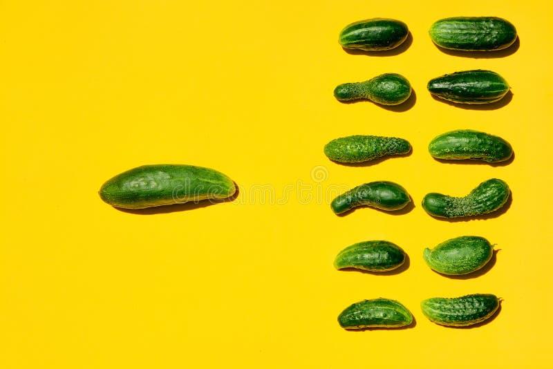 De komkommers symboliseert leiding, groepswerk, de hoofd en ondergeschikte werknemers, de leider en de maatschappij royalty-vrije stock fotografie