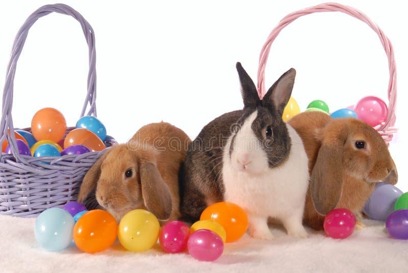 De Konijntjes van de lente met Eieren stock afbeeldingen