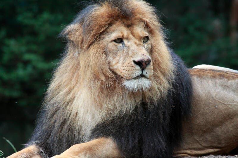 De koning stock afbeeldingen