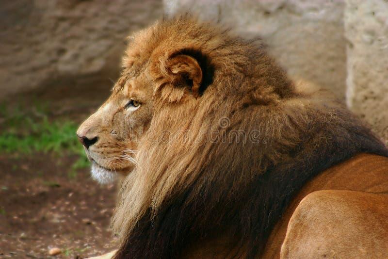 De koning royalty-vrije stock foto