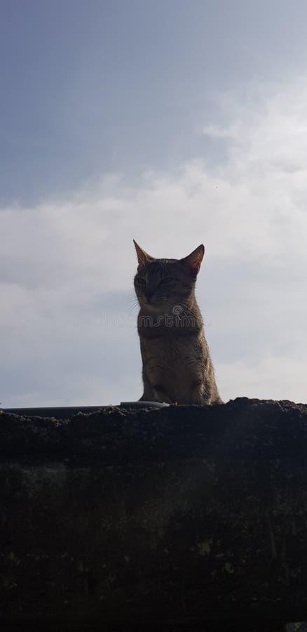 De koning van de rots stock afbeeldingen