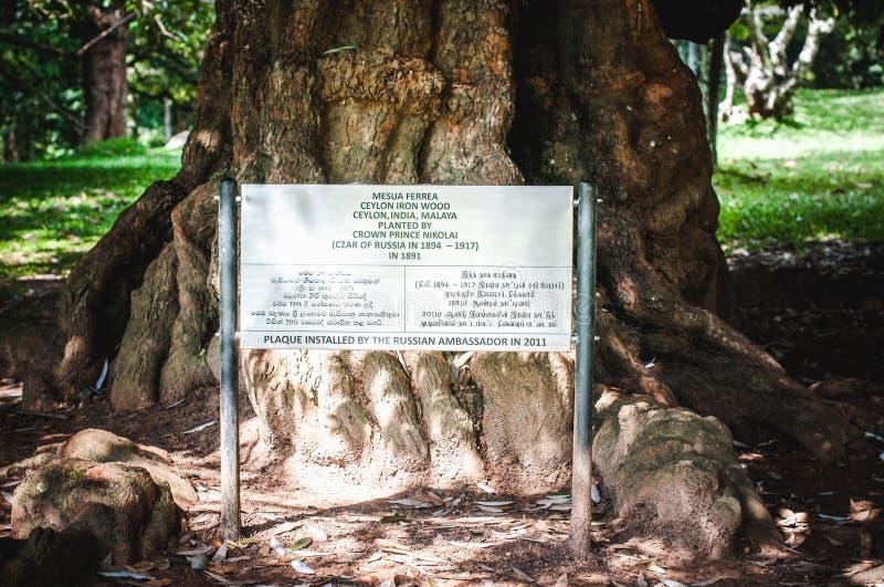 De Koninklijke Botanische Tuinen Kandy, Sri Lanka royalty-vrije stock foto's