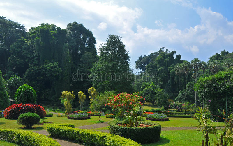 De Koninklijke Botanische Tuinen van Kandy (Sri Lanka, Azië) stock fotografie