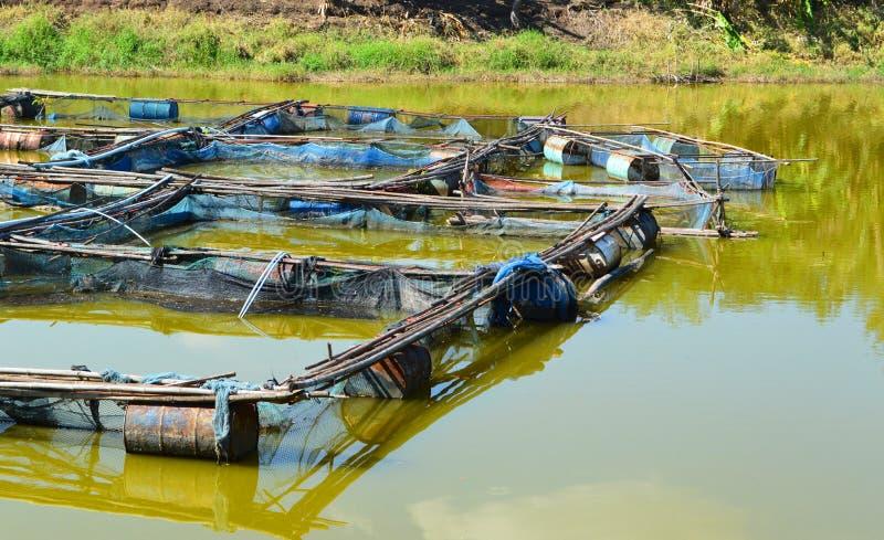 De kooi die van vissen in de rivier bewerkt stock afbeelding
