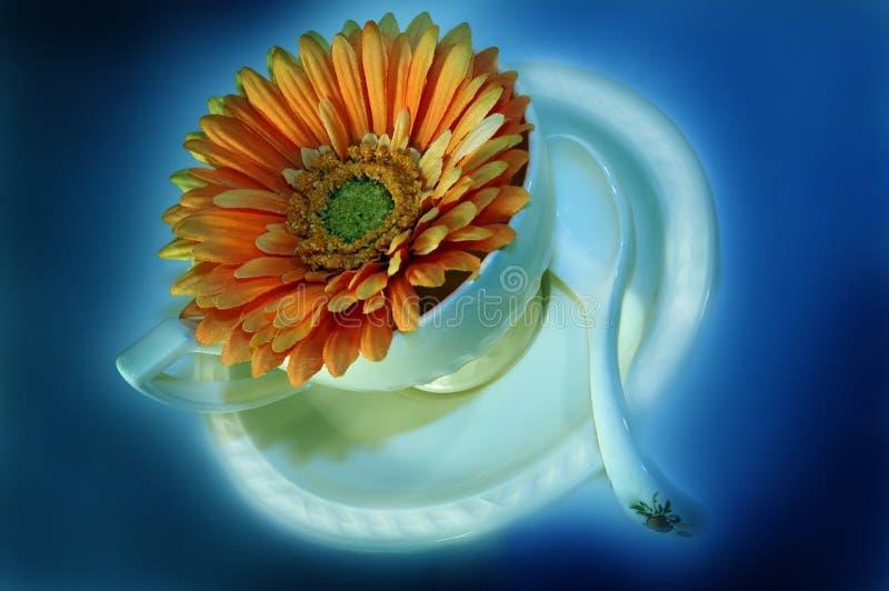 De kop van de koffie met bloem 5 stock afbeeldingen