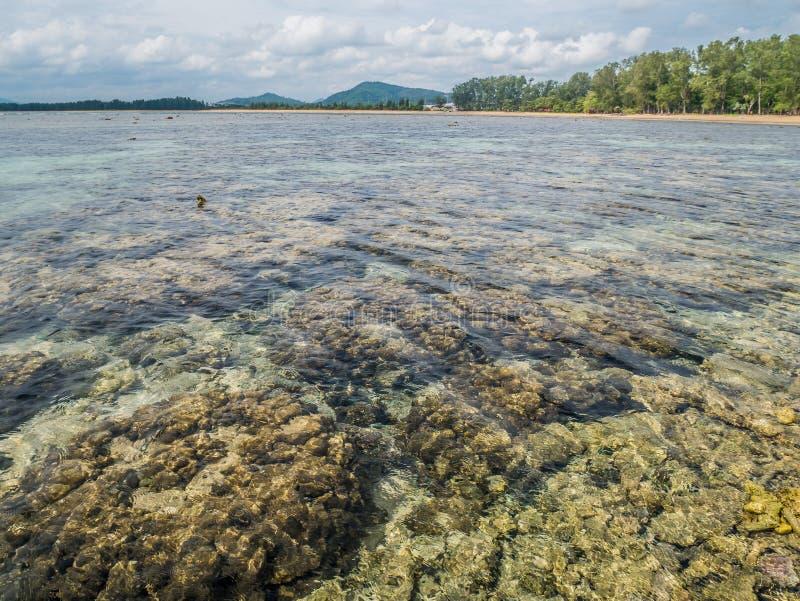 De koraalriffen verslechteren Fragmenten van koraal De koraalriffen zijn eind royalty-vrije stock fotografie