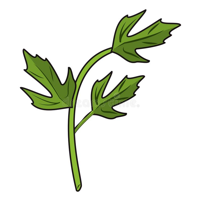 De koriander verlaat kruidenbeeldverhaal stock illustratie