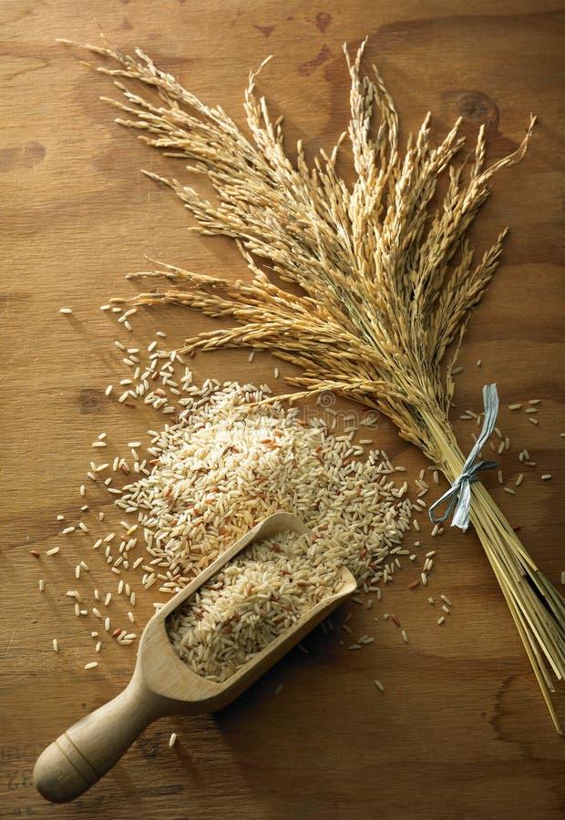 De korrel van de rijst royalty-vrije stock foto's
