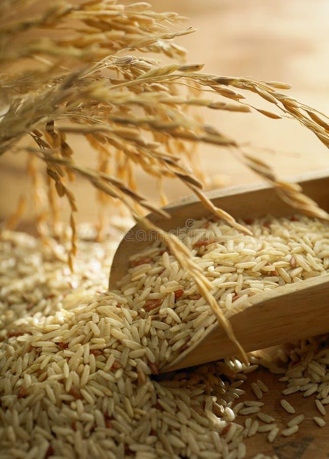 De korrel van de rijst stock foto's