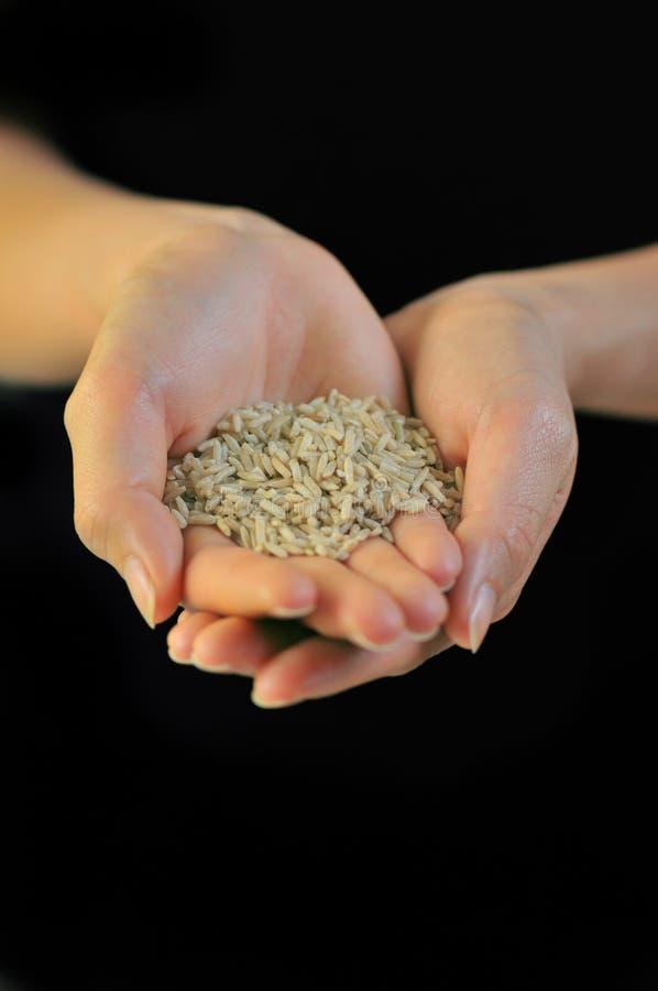 De korrels van de rijst stock foto's