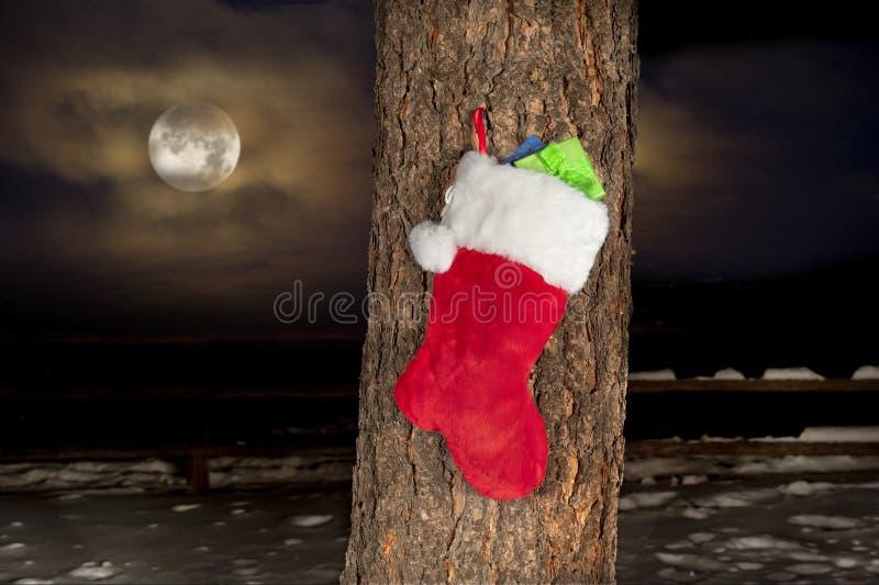 De kous van Kerstmis op pijnboomboom stock fotografie
