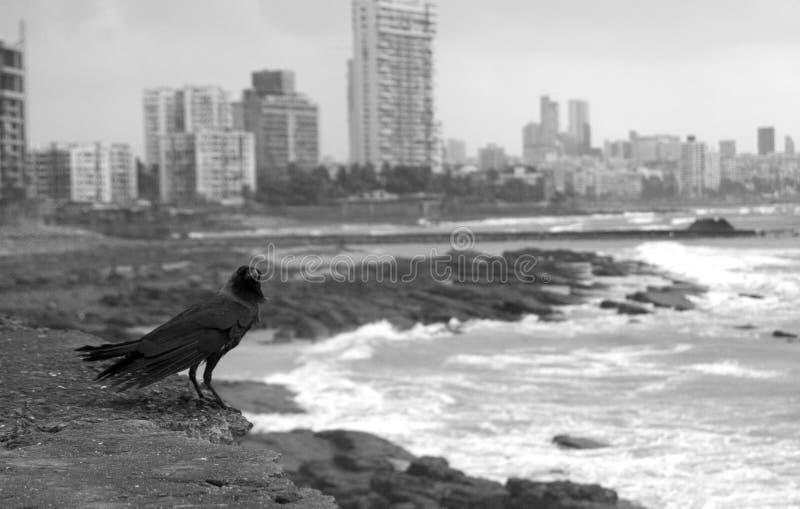 De kraai van Mumbai royalty-vrije stock afbeeldingen