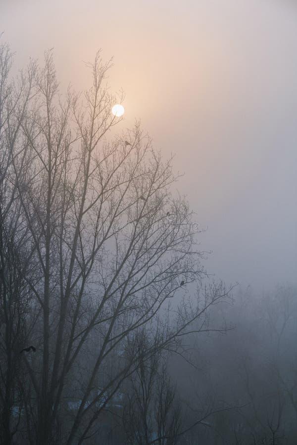 De kraaien zitten op de takken van een boom zonder bladeren Silhouet tegen de hemel royalty-vrije stock foto
