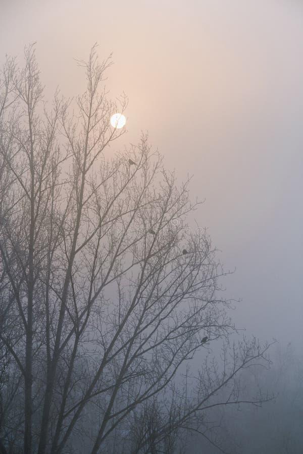 De kraaien zitten op de takken van een boom zonder bladeren Silhouet tegen de hemel royalty-vrije stock afbeeldingen