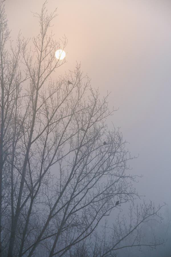 De kraaien zitten op de takken van een boom zonder bladeren Silhouet tegen de hemel royalty-vrije stock foto's