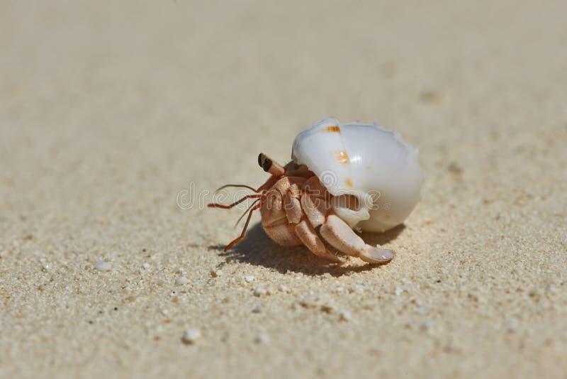 Download De Krab Van De Kluizenaar Op Een Strand Stock Foto - Afbeelding bestaande uit tropisch, kustlijn: 29504866
