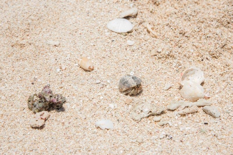 Download De Krab Van De Kluizenaar Op Zandig Strand Stock Afbeelding - Afbeelding bestaande uit eilanden, gedrag: 107706887