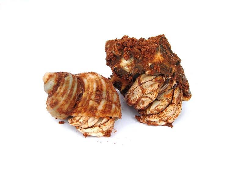 De krabben van kluizenaars royalty-vrije stock foto's